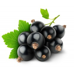 Blackcurrant 10ml