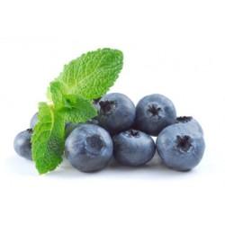 Blueberry Menthol 10ml